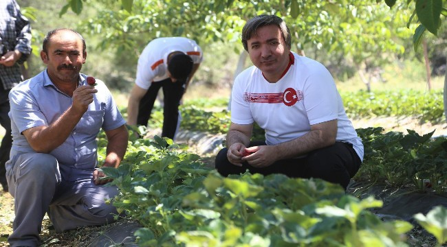 """Vali Hamza Aydoğdu """"Sanal toplulaştırma projesi ile Aksaray'da çilek üretimini arttıracağız"""""""