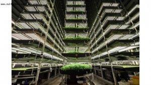 Hedef 1 milyon m2'lik tarım fabrikası kurmak