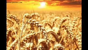Tarımda havza modeli yaygınlaştırılmalı